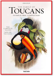 John Gould's Family of Toucans